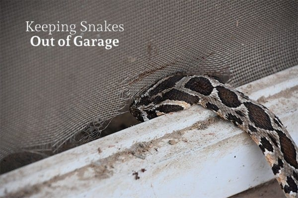 How To Keep Snakes Out Of Your Garage Action Garage Door